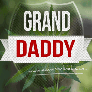 grand-daddy-clones