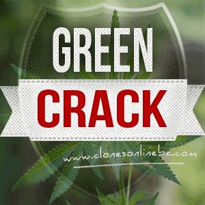 creen crack clones